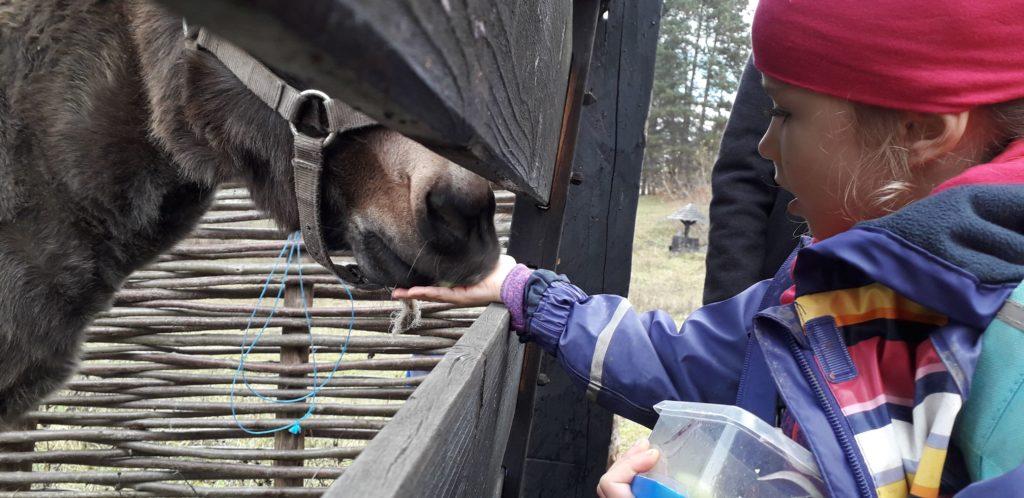 Copii de grădiniță hrănind animalele
