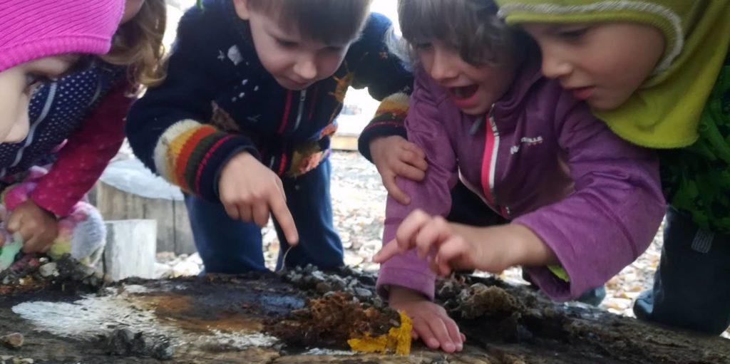 Educație prin joacă în natură 2